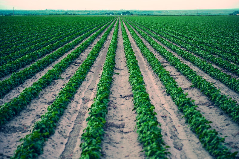 800px-Lower_Arkansas_Valley_Agriculture
