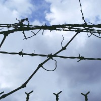 Tangled Barbed Wire