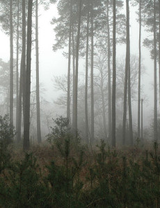 800px-Forest_in_mist