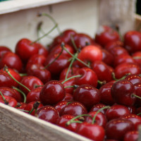 cherries-USER-QuinnDombrowski
